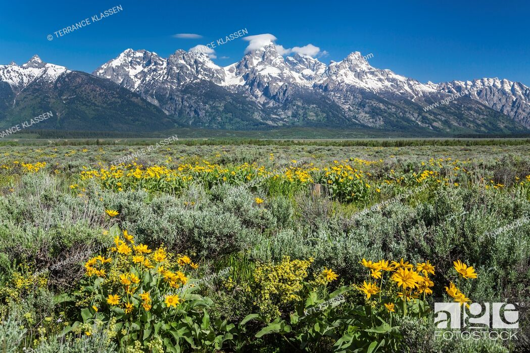 Imagen: Flower meadows and mountains in the Grand Teton National Park, Wyoming, USA.