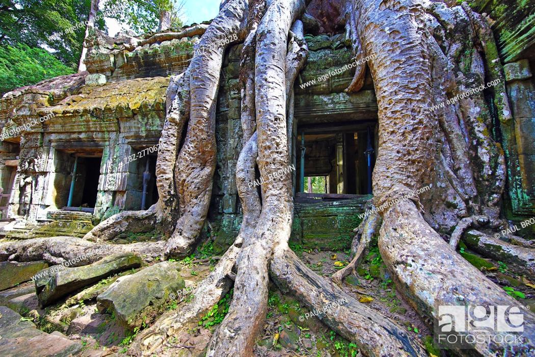Stock Photo: Spung tree roots covering ruins at Ta Prohm Temple, Angkor, Siem Reap, Cambodia.