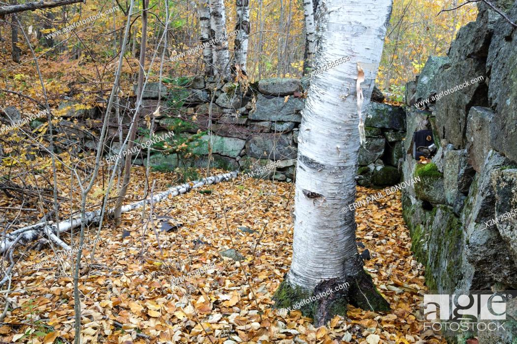 Stock Photo: Remnants of the Goulding house in the abandoned village of Livermore in the New Hampshire White Mountains. This was a logging village in the late 19th and early.