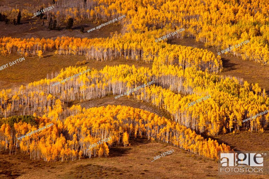 Stock Photo: Fall color near Crested Butte, Colorado.