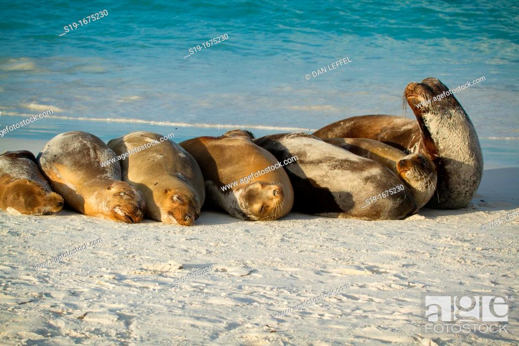 Stock Photo: Sea Lions resting on beach, Galapagos Islands.