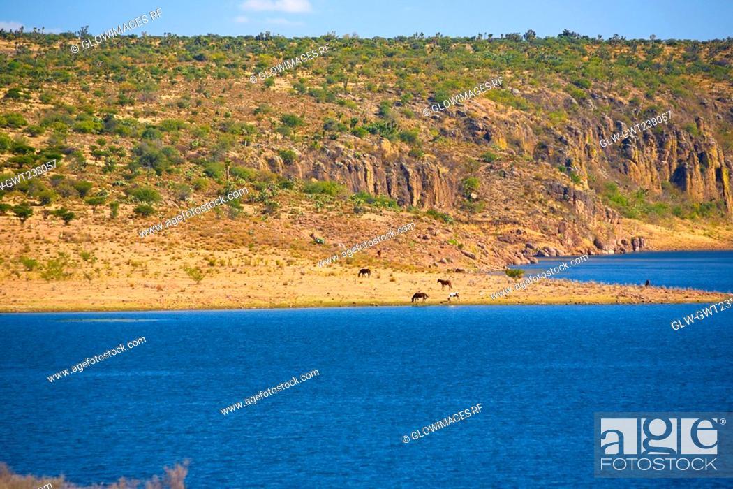 Stock Photo: Panoramic view of a river, San Jose De Gracia, Aguascalientes, Mexico.