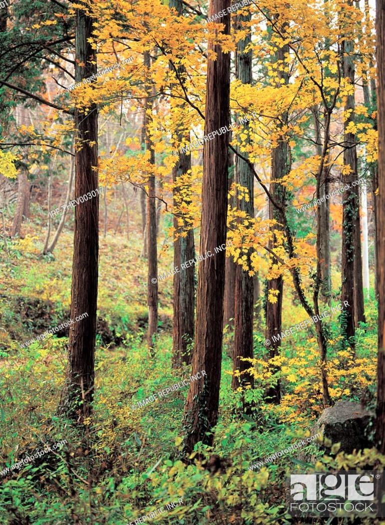 Stock Photo: trees in autumn.