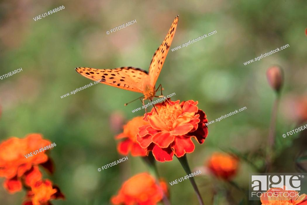 Stock Photo: plants, plant, betterfly, insect, flower, flowers, nature.