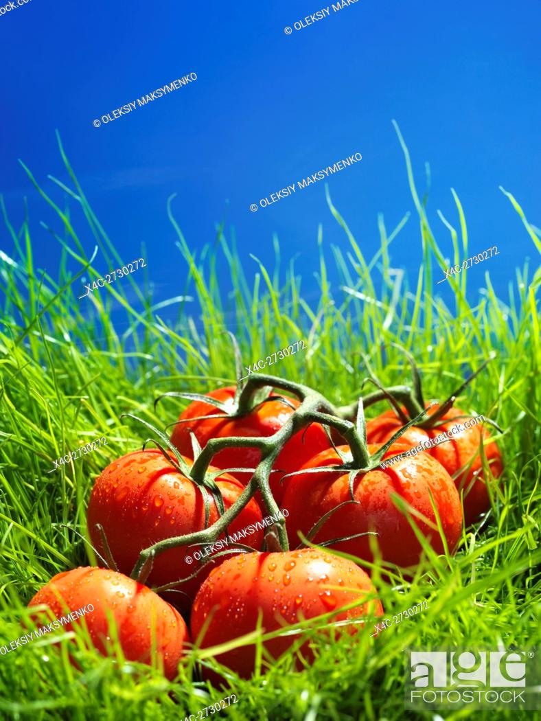 Stock Photo: Tomatoes on the wine in green grass under blue sky artistic food still life.