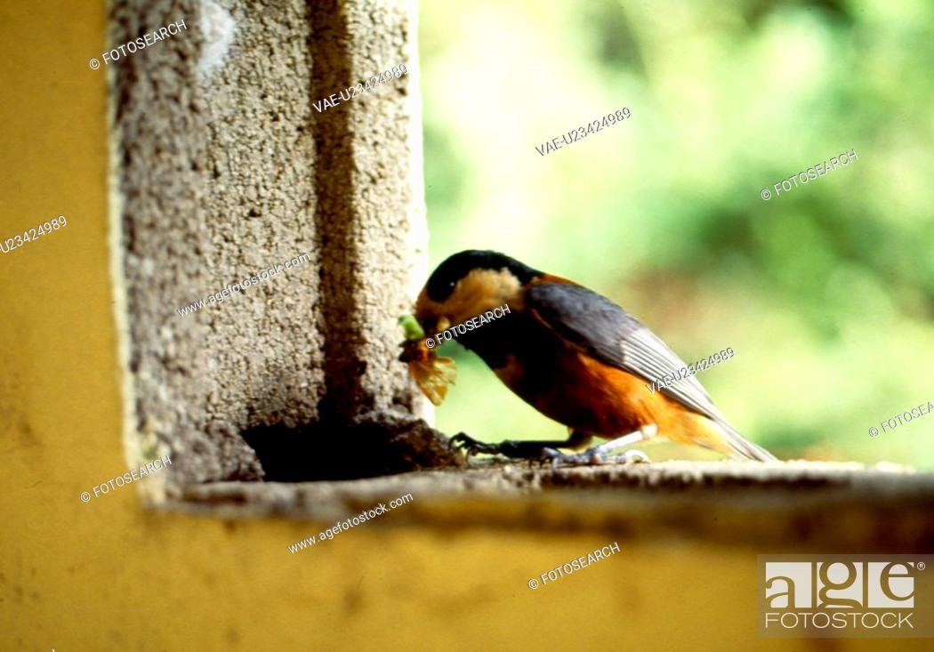 Stock Photo: bug, nature, wild, outdoors, scene, animal, landscape.