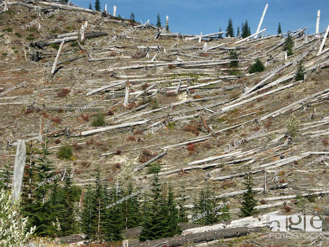 Stock Photo: Destruction, Mount St. Helens blast. Washington, USA.
