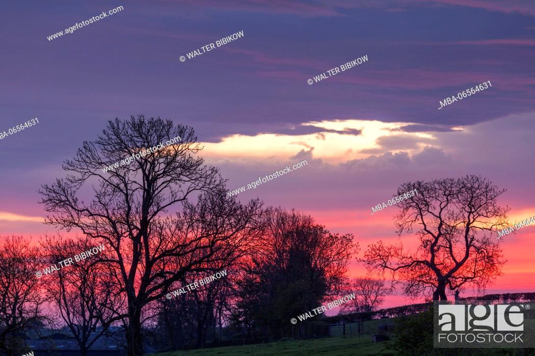 Stock Photo: UK, Northern Ireland, County Antrim, Ballymoney, sunrise by The Dark Hedges.