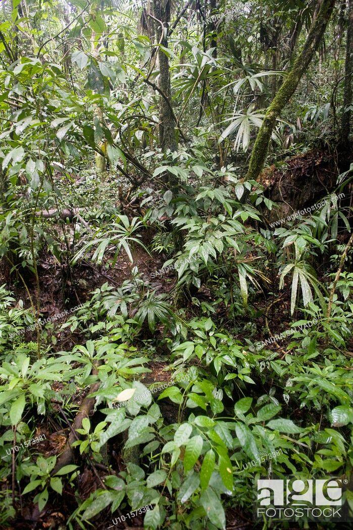 Stock Photo: Natural Reserve of the Biosphere Montes Azules, Las Nubes, Chiapas, México.