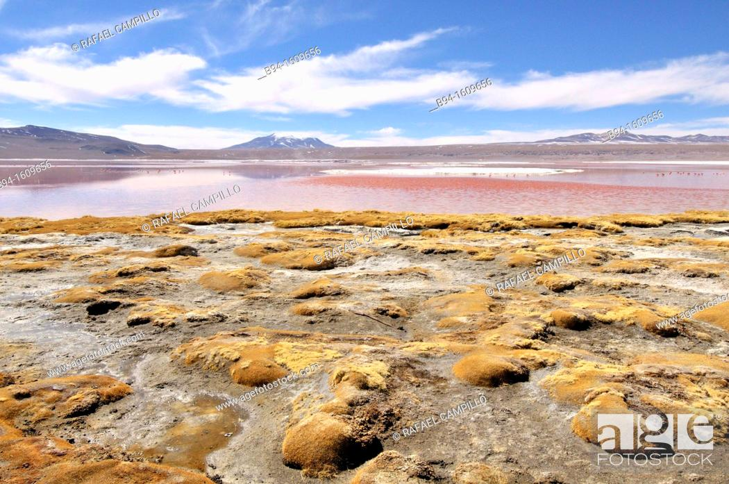 Stock Photo: Laguna Colorada (Red Lagoon) is a shallow salt lake in the southwest of the altiplano of Bolivia, within Eduardo Avaroa Andean Fauna National Reserve and close.