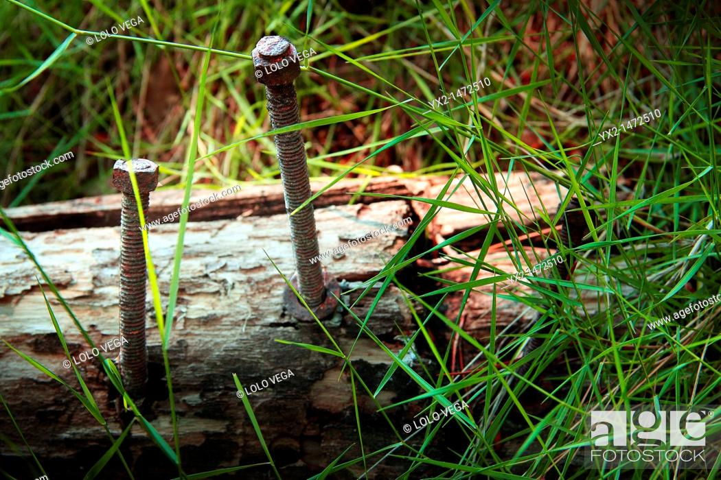 Stock Photo: Rusty old screws in wooden log.