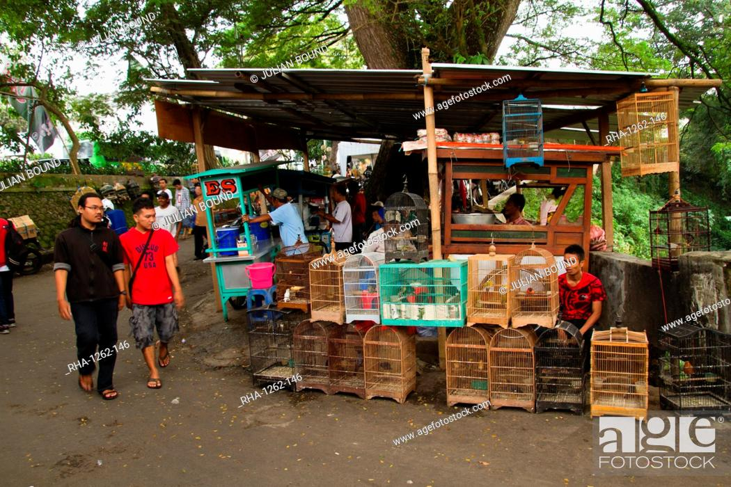 The Bird And Flower Markets Of Malang Malang East Java Indonesia Southeast Asia Asia Stock Photo Picture And Rights Managed Image Pic Rha 1262 146 Agefotostock