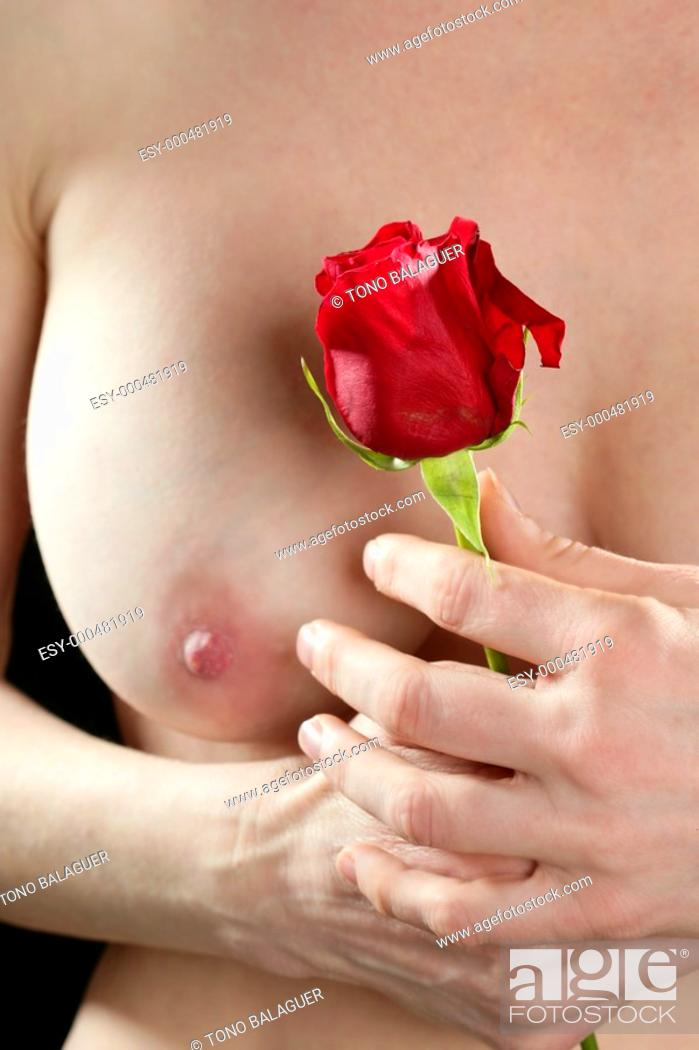 Stock Photo: Beautiful woman body holding in hand a red rose.
