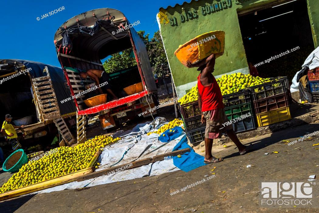 Stock Photo: An Afro-Colombian worker carries a basket loaded with green oranges (for juicing) in an open-air fruit market in Barranquilla, Colombia.