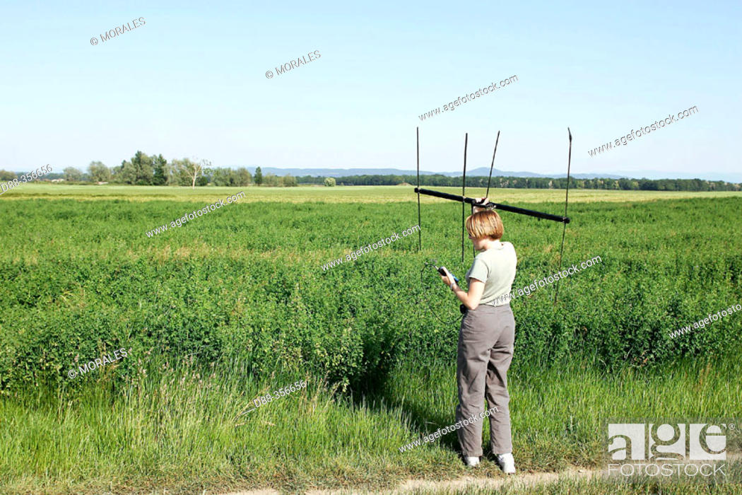 Stock Photo: Naturalist working with sound sensor in field. Alsace, France.