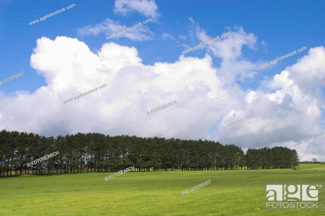 Stock Photo: grass, shadow, wood, lush, natural, environment.