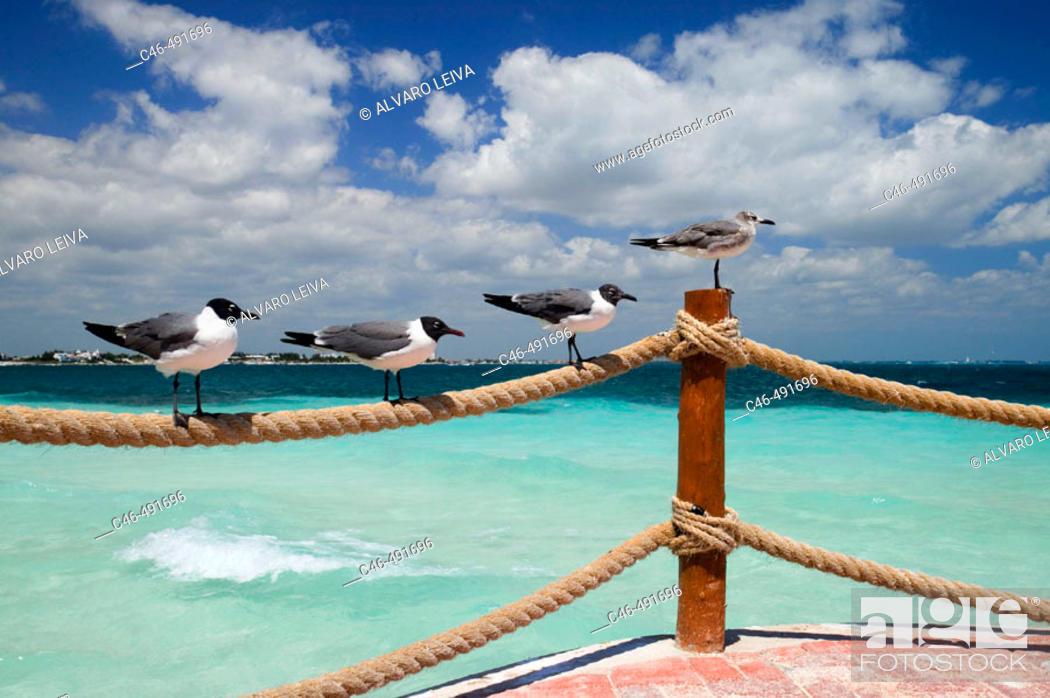 Stock Photo: Beach, Cancun. Quintana Roo, Yucatan Peninsula, Mexico.