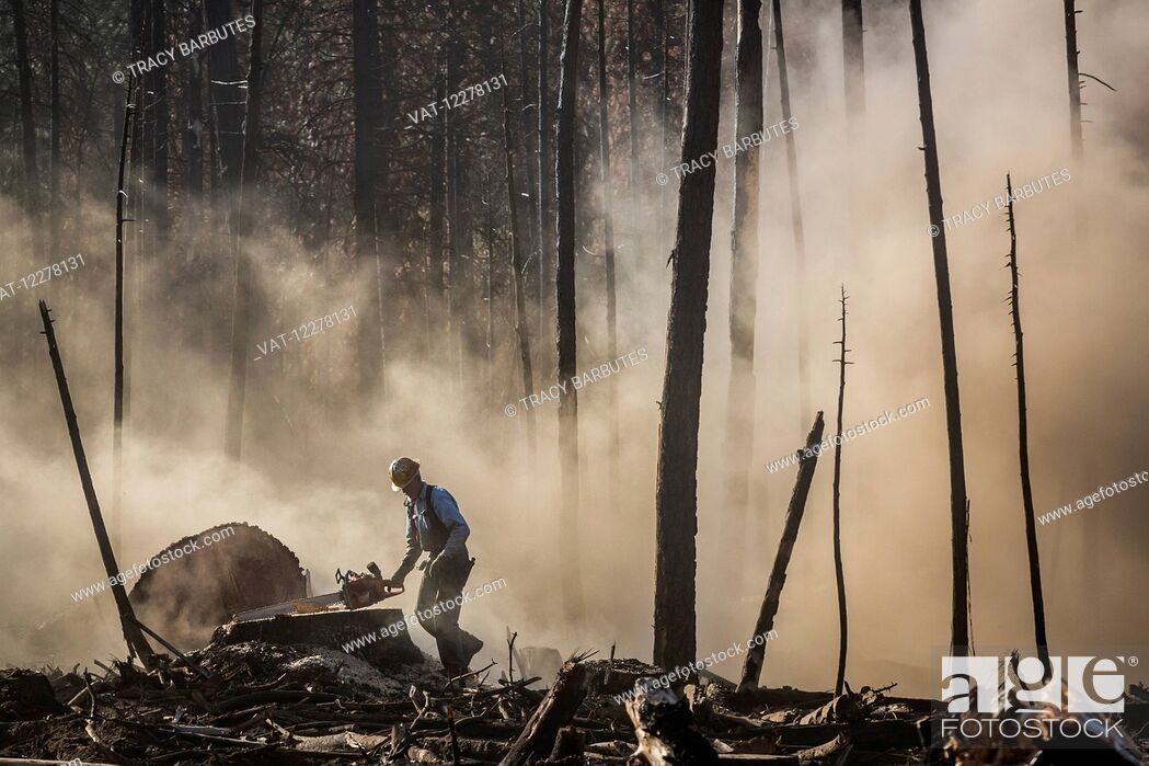 Imagen: A tree faller, contracted by Crook Logging, removes trees that were damaged during a 2013 wildfire in the Stanislaus National Forest along Evergreen Road near.