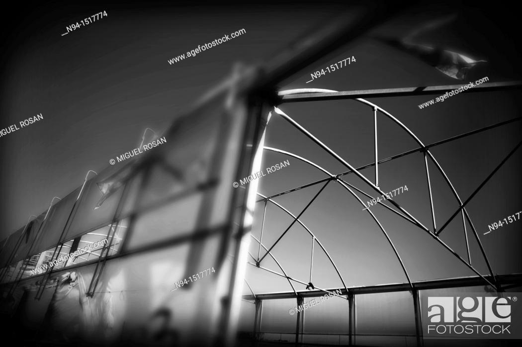 Stock Photo: Greenhouse dilapidated by neglect of the rural area of Almeria  Andalusia  Spain.