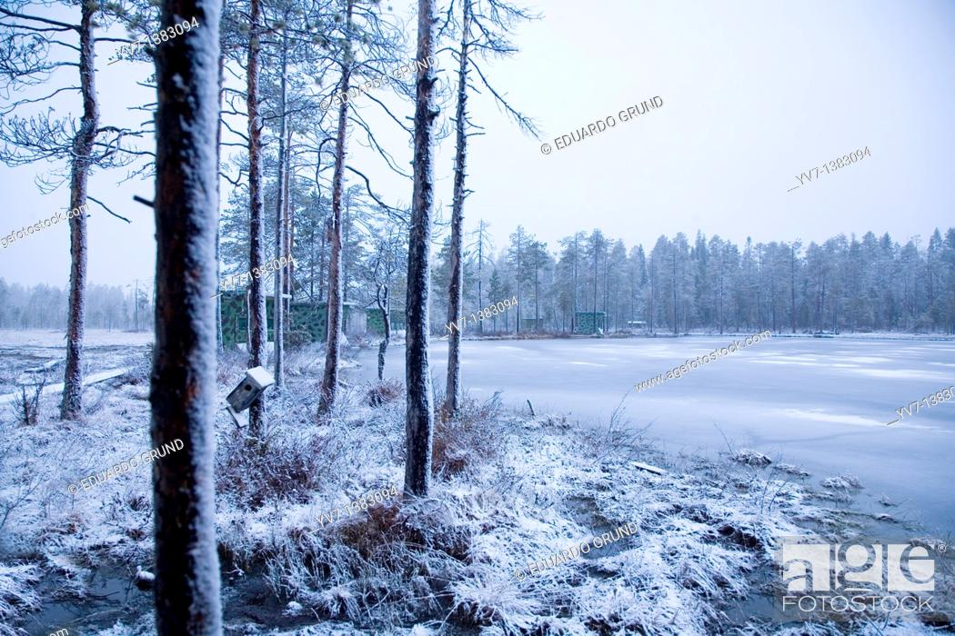 Stock Photo: Landscape with hides for watching brown bears around a frozen lake in the Finnish Taiga.