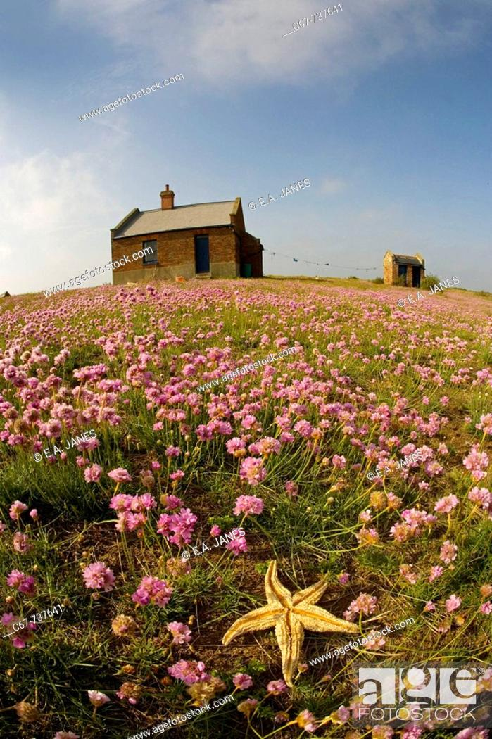 Stock Photo: The Watch House Blakeney Point North Norfolk May.