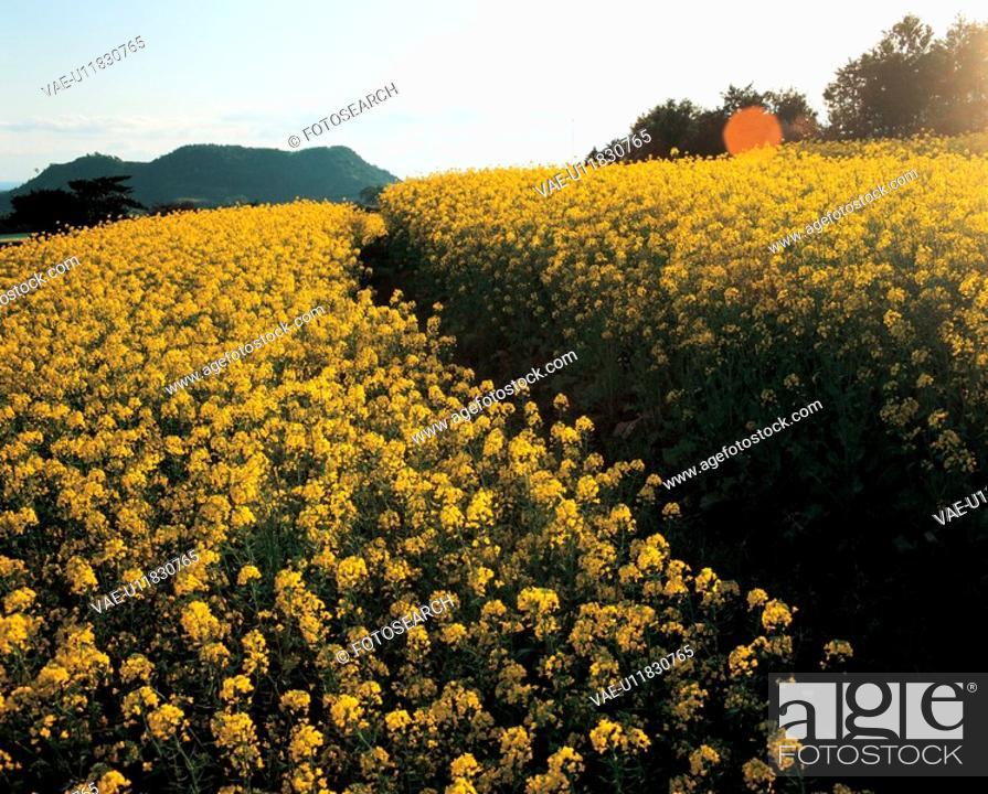 Stock Photo: plant, scenery, cloud, sky, landscape, plants, nature.