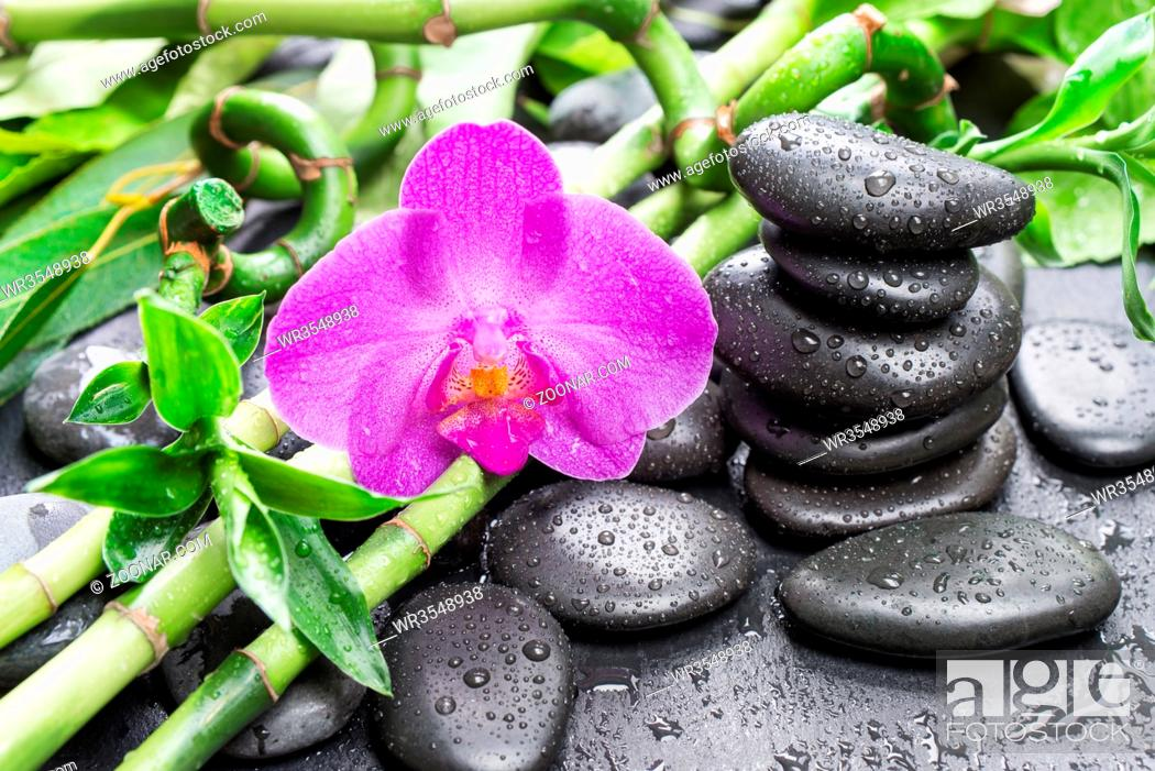 Stock Photo: Spa concept with black basalt massage stones, pink orchid flower and lush green foliage covered with water drops on a black background.