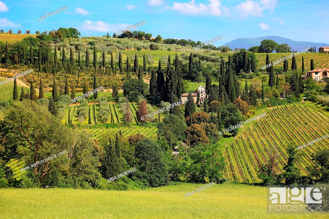 Stock Photo: Italy, scenery in the Toscana with Castelnuovo dell'Abate with cypresses and olive trees, viticulture.