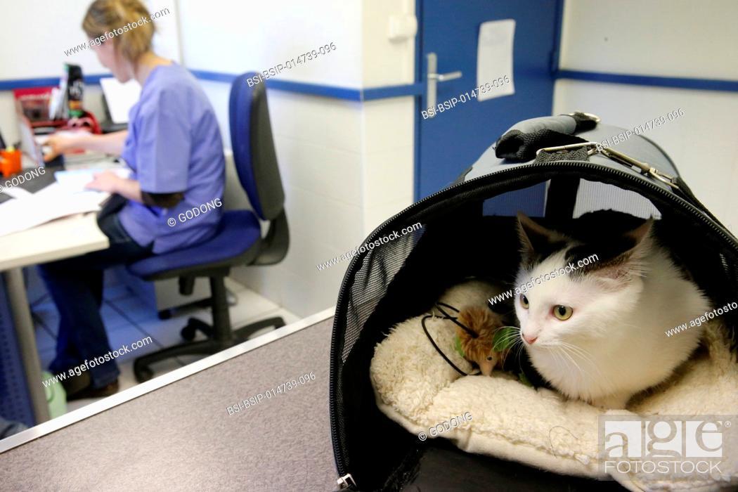 Stock Photo: Veterinarian's surgery.