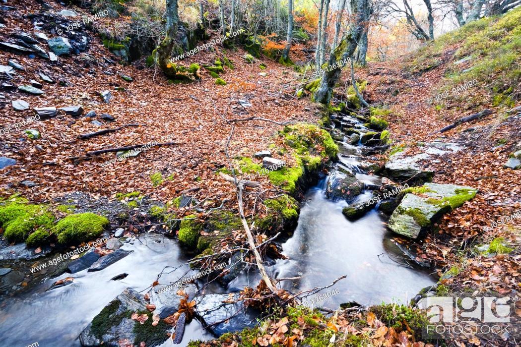Stock Photo: The Zarza stream in the Sierra Norte Guadalajara Castilla la Mancha Spain.