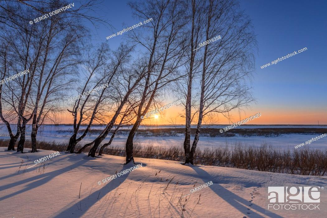 Stock Photo: Birch trees on the edge of a snow-covered river valley on a winter evening.