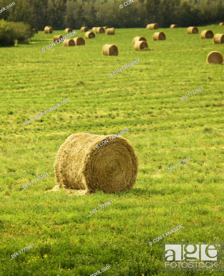 Stock Photo: Agriculture.