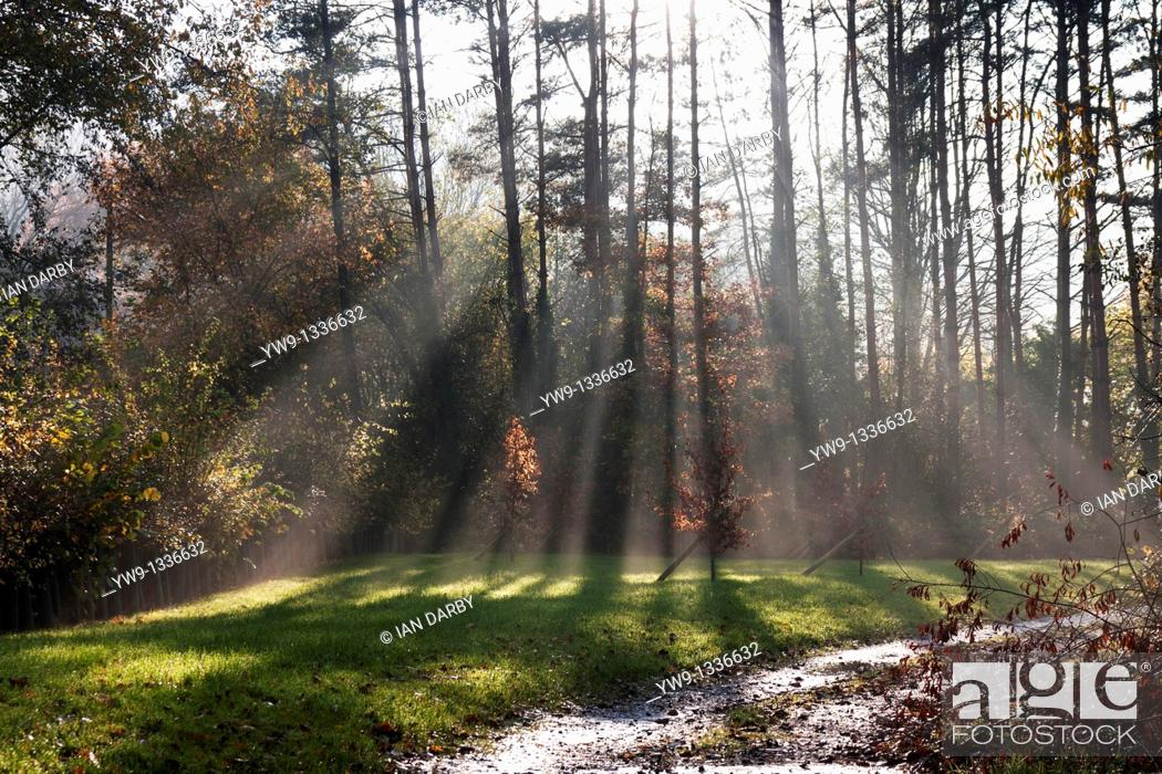 Stock Photo: Shafts of sunlight in the morning mist.