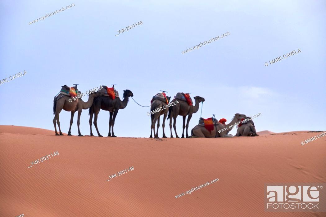 Stock Photo: Africa, Morocco desert of merzouga.
