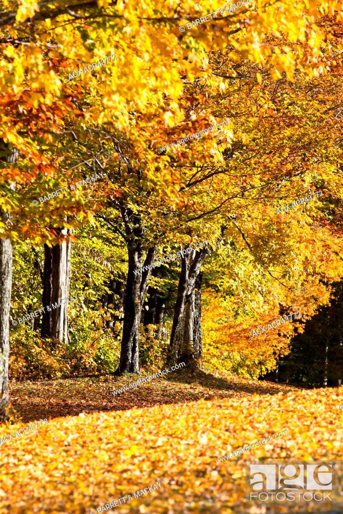 Fall foliage, Mactaquac Provincial Park, Saint John River Valley ...