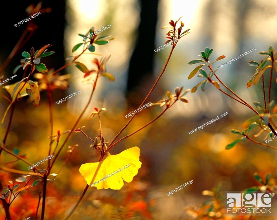 Stock Photo: season, plant, leaf, branch, tree, fall, nature.