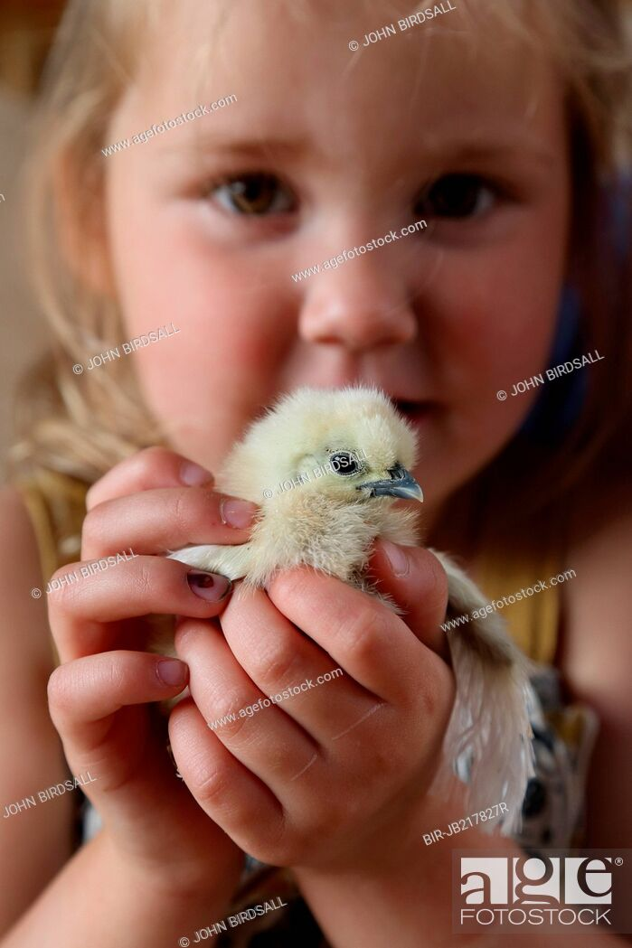 Imagen: Chick being held by young girl.