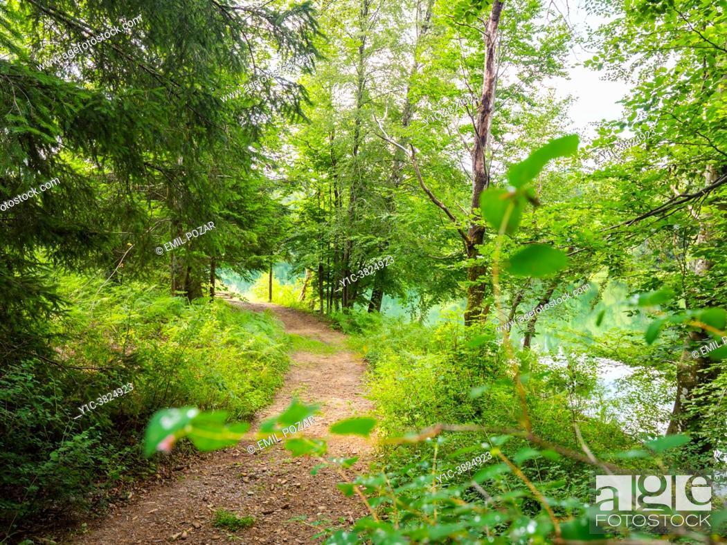 Stock Photo: Spring season forest pathway Lokve lake near Mrzla vodica in Croatia.