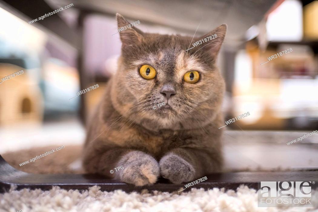 Stock Photo: portrait of cat.