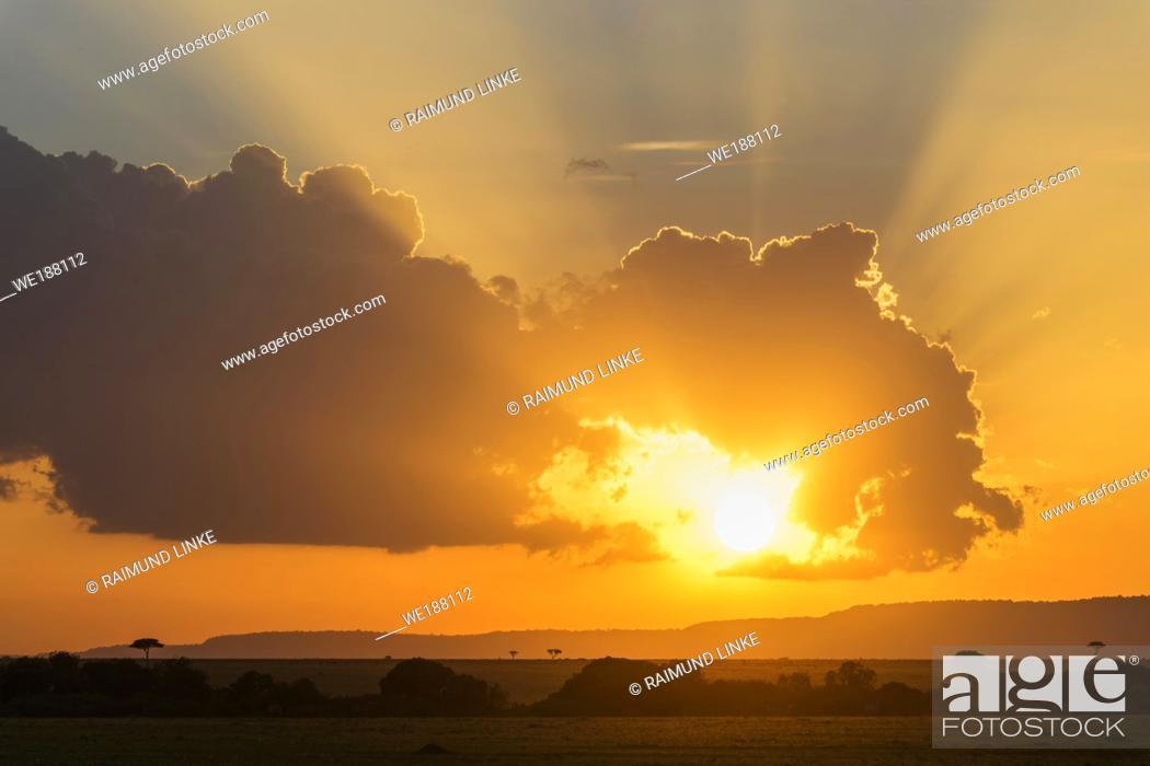 Stock Photo: Typical savannah landscape at sunset, Masai Mara National Reserve, Kenya, Africa.