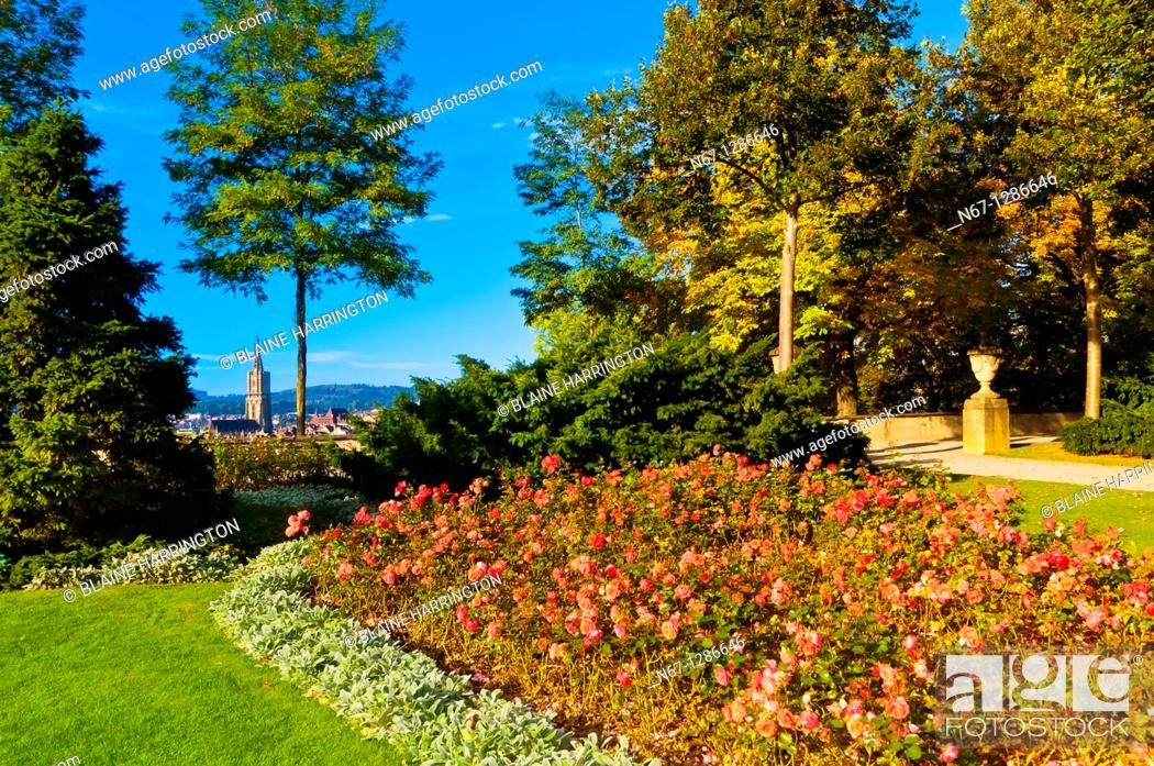 Stock Photo: The Rose Garden Rosengarten with the Munster Cathedral of Bern in background, Bern, Canton Bern, Switzerland.