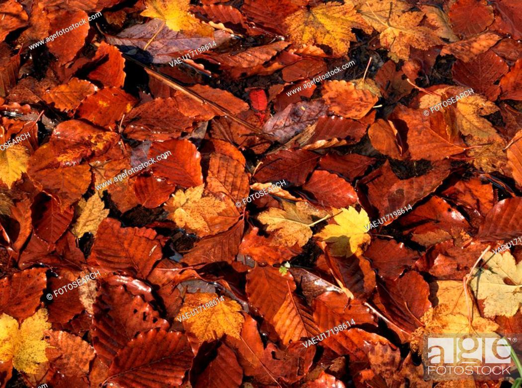 Stock Photo: Fallen Autumn Leaves.