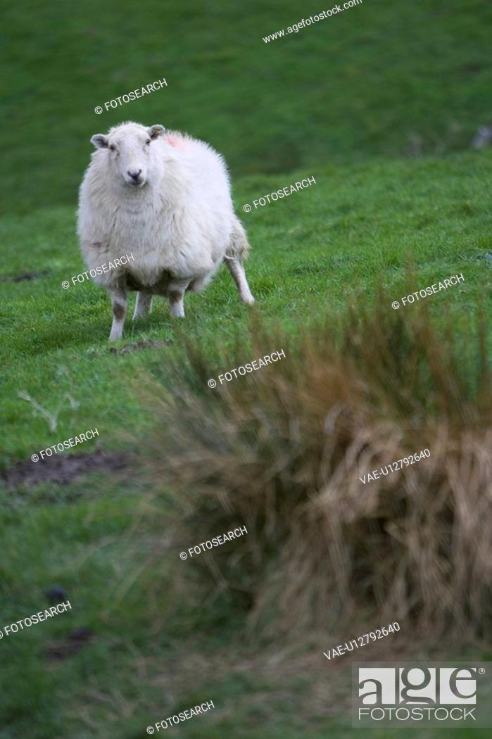 Stock Photo: Close-Up, Day, Field, Grass, Green.