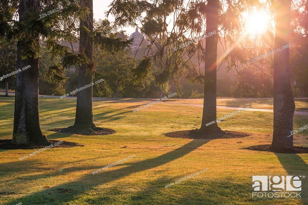 Stock Photo: Sunrise with pine trees in a park setting. Balboa Park, San Diego, California, USA.