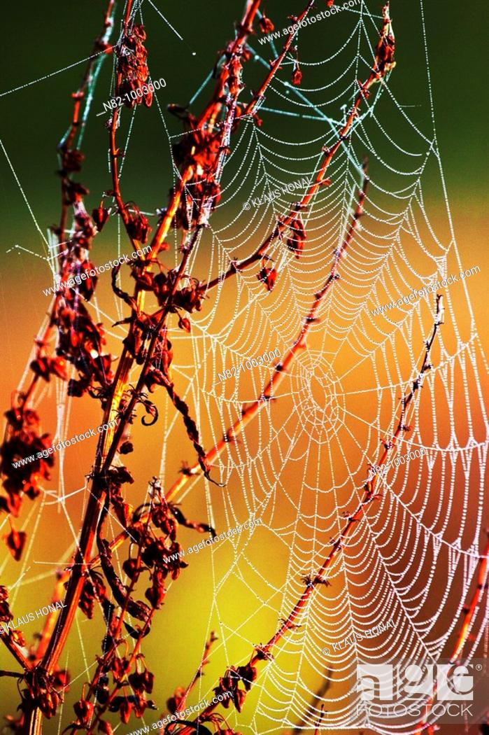 Stock Photo: Dew drops in spiderweb - Bavaria/Germany.