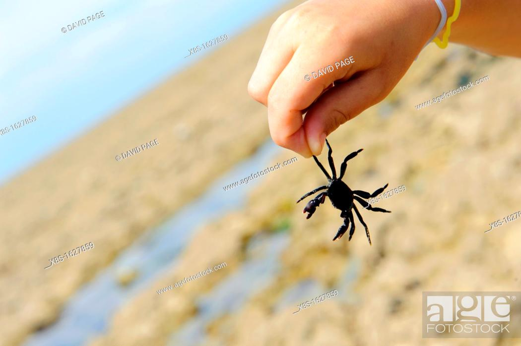 Stock Photo: Stock photo of a boys hand holding a black crab.