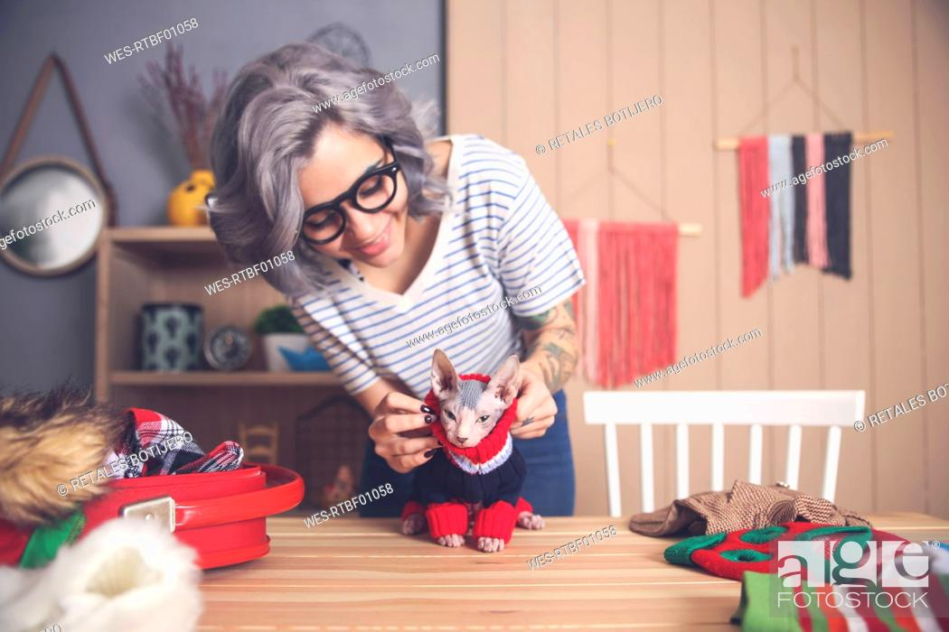Stock Photo: Woman putting pullover on her Sphynx cat at home.