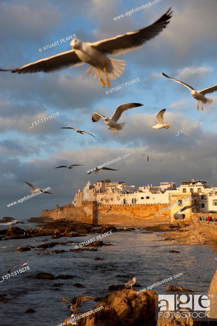 Stock Photo: Seagulls, Essaouira, Morocco.