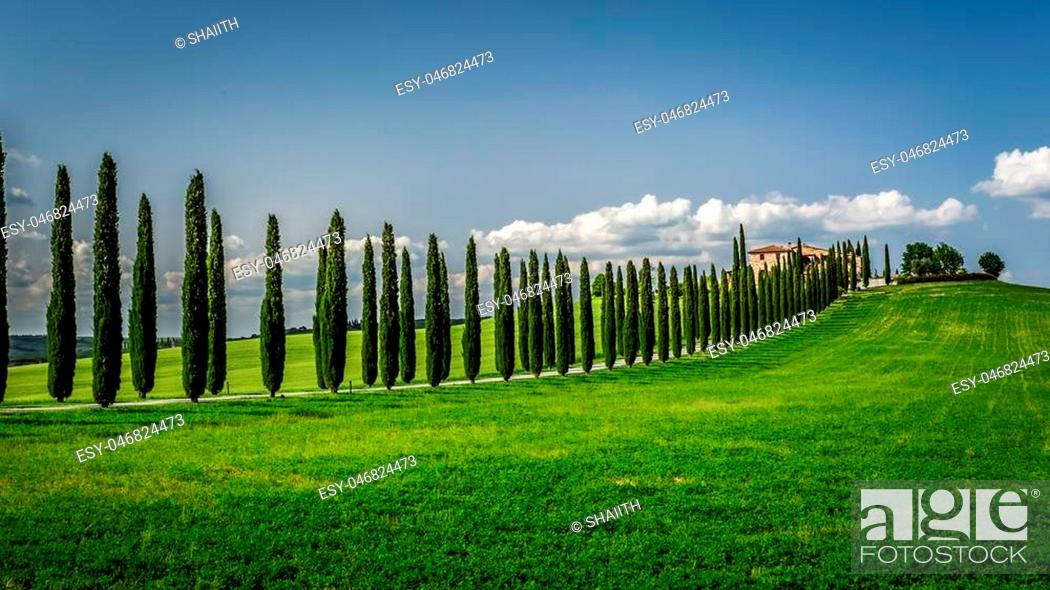 Stock Photo: Road with Cypresses to agritourism in Tuscany.
