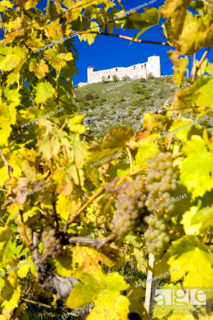 Stock Photo: ruins of Devicky castle with vineyard, Czech Republic.